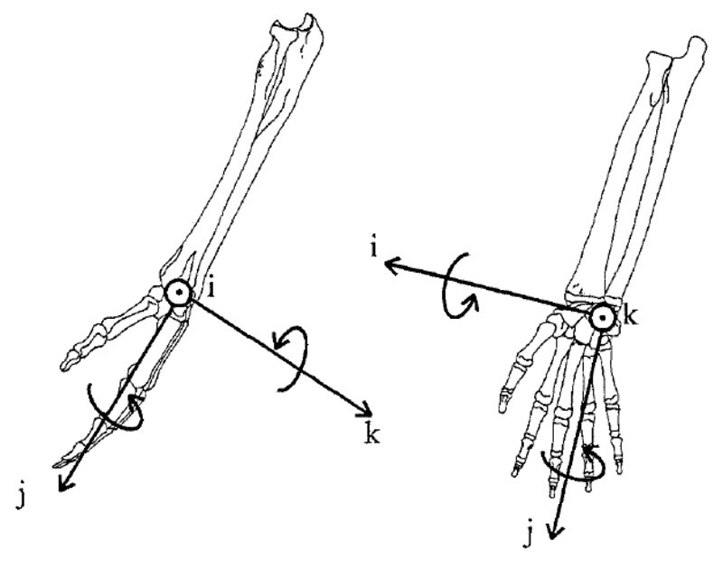 Wrist Joint Motions And Reaction Forces In Wheelchair Users With